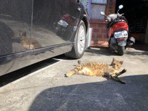 台湾のネコ