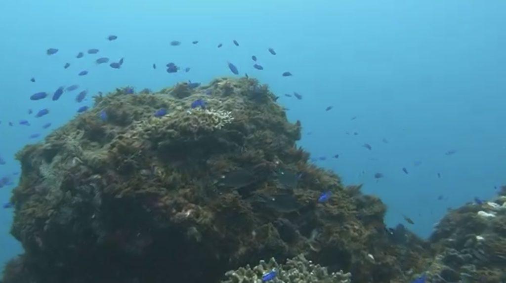 台湾北部ダイビング