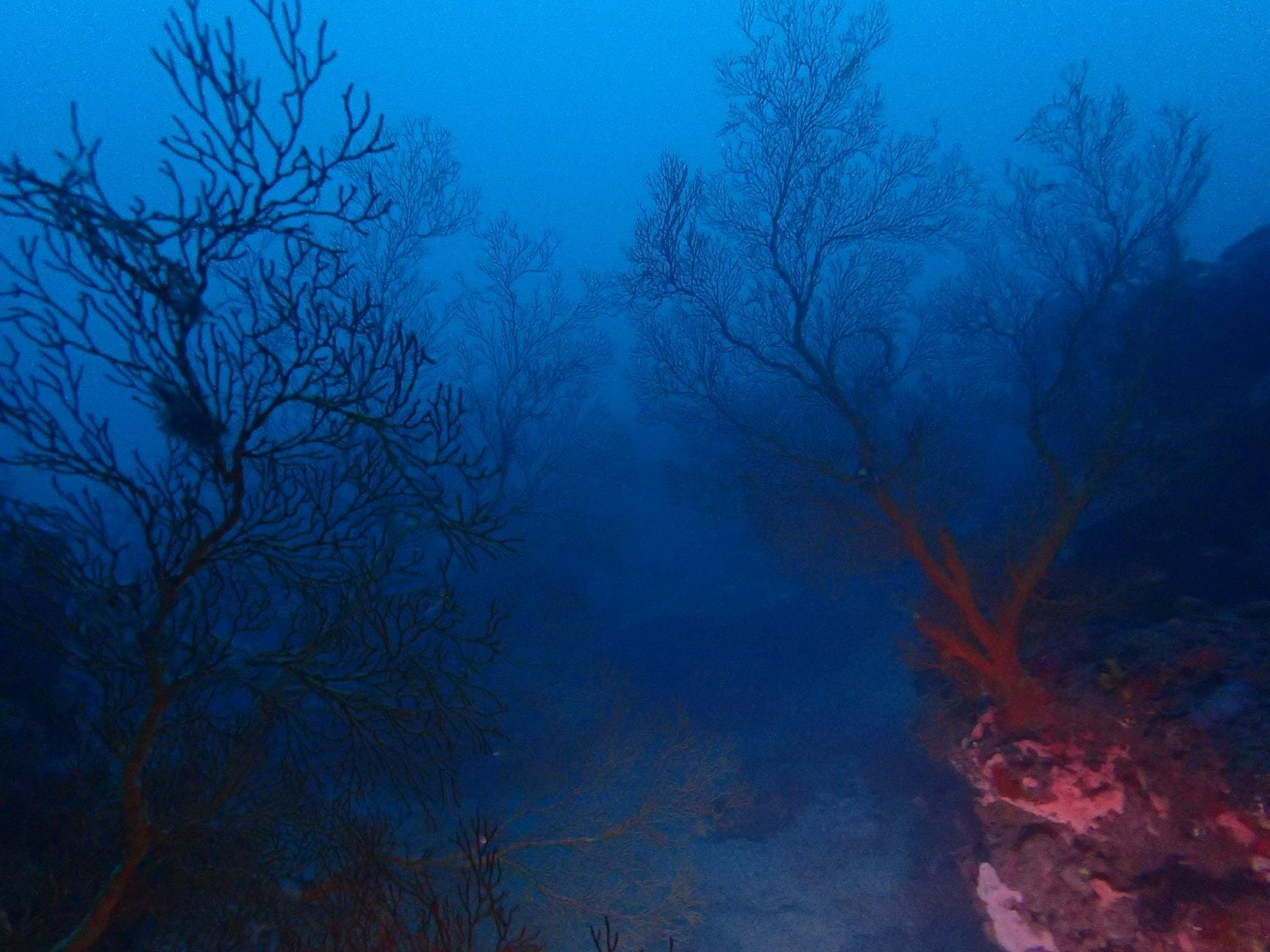 台湾 サンゴ