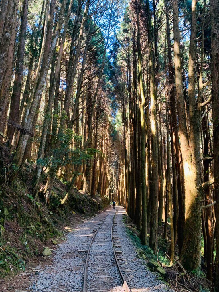 台湾本気登山特富野古道