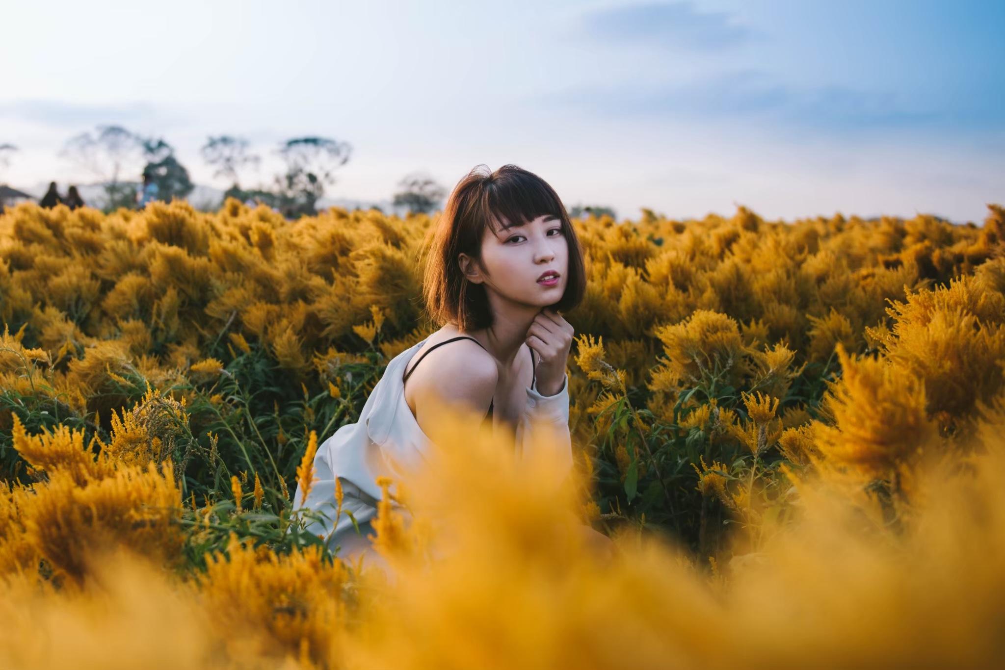 台湾のフォトジェニックな花畑