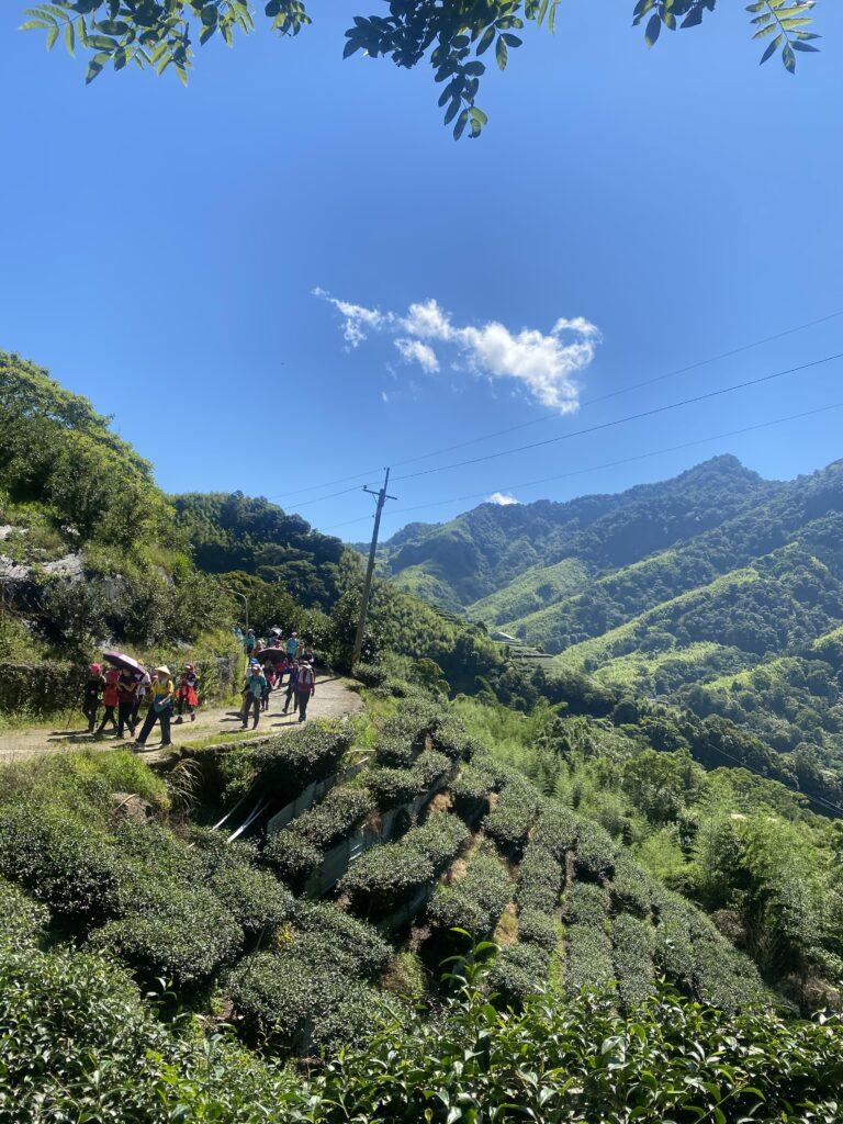 台湾登山茶畑