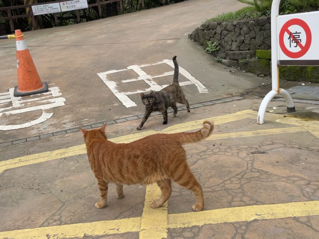 台湾猫の喧嘩