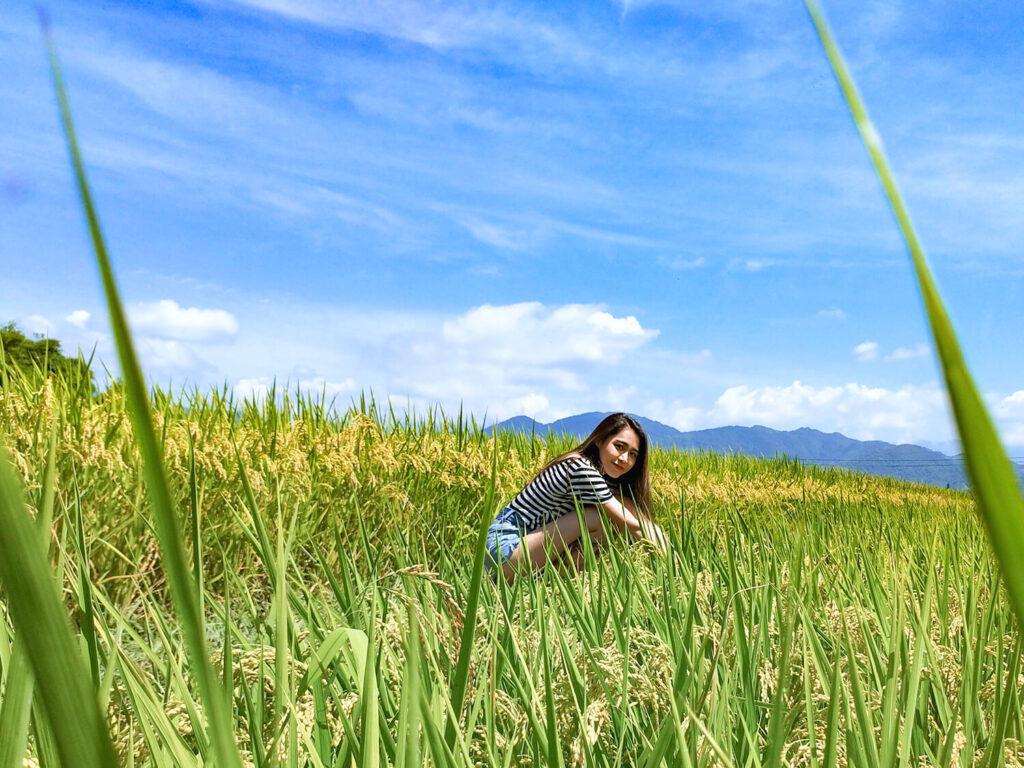 台湾のお米